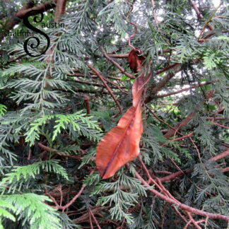 Individually crafted pretty copper leaf sculpture which can be displayed indoor and outdoor.