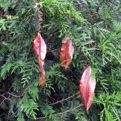Copper Leaf Sculptures